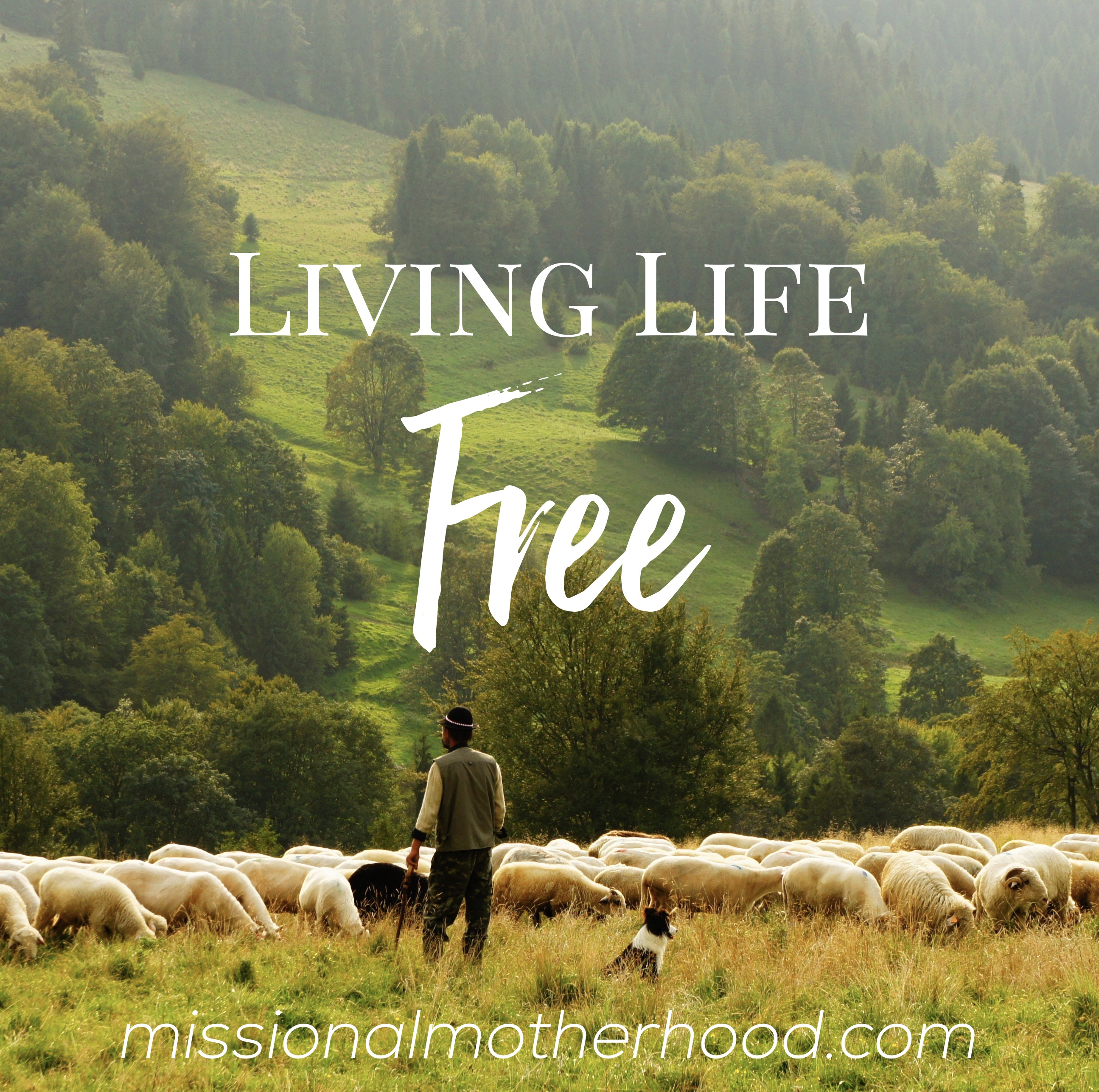 Living Life FREE